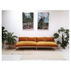 Pop & Scott 'Dreamer Couch' in Gold Velvet
