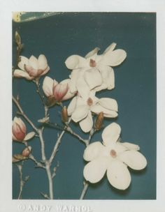 lafilleblanc: Andy Warhol Flowers 1980 polaroid print More Pins Like This At FOSTERGINGER @ Pinterest