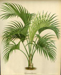 v.21 (1874) - L'Illustration horticole : - Biodiversity Heritage Library