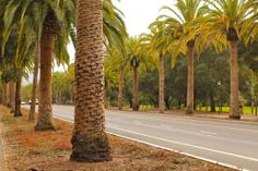 55 Things to Do in Palo Alto