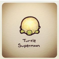 Turtle Wayne Sweet Turtles, Cute Turtles, Baby Turtles, Cute Turtle Drawings, Animal Drawings, Tiny Turtle, Turtle Love, Kawaii Drawings, Easy Drawings
