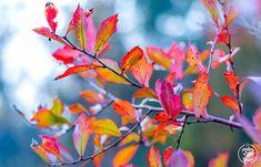 Fall is planting tim