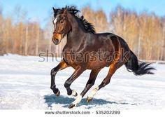 Gratis afbeelding op Pixabay - Paard, Vleugel, Hemel, Pegasus