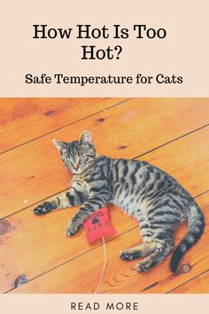 Our air conditioning went out last week, and before repair, the indoor temperature was 80 and rising. When does it become too hot inside for cats?