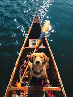 Golden Retriever in a canoe! Cute Puppies, Cute Dogs, Dogs And Puppies, Doggies, Animals And Pets, Baby Animals, Cute Animals, Funny Animals, Animals Images