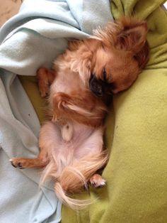 Trop chou quand il dort !!