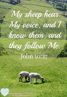 "Verse :) Beth Moore John says the sheep "". hear and are listening to My voice ."" We can't listen to God's voice if we don't quiet ourselves and our world. Jesus Quotes, Bible Quotes, Biblical Quotes, John 10 27, Scripture Pictures, My Prayer, Daily Prayer, Beth Moore, Bible Knowledge"