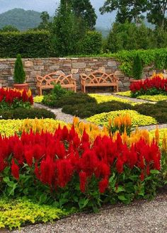 The bright red and orange-yellow flowers appear to be celosia and they add a very colorful combination to the garden.