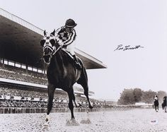 """Ron Turcotte Signed Photo """"Looking Back"""" on Secretariat at Belmont Stakes (PSA COA) - Pristine Auction Derby Horse, The Great Race, Triple Crown Winners, Thoroughbred Horse, Racehorse, Horse Quotes, Best Vibrators, Horse Art, Horse Racing"""