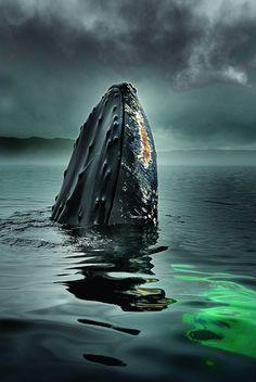 Humpback whale photo by Duiken Redactie Beautiful Creatures, Animals Beautiful, Photo Animaliere, Ocean Creatures, Tier Fotos, Humpback Whale, Whale Sharks, Sea World, Ocean Life