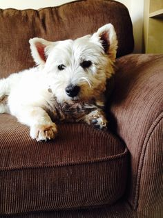 Best Dog Food For Westies With Skin Problems