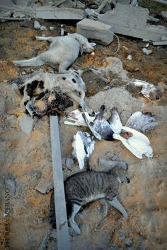 Animals killed in #Israeli airstrike on north #GAZA , the building bombed was used as a breeding, 30/01/2014