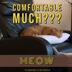 We Love a Sassy Cat! Courtesy Patricia Lynne