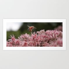 """""""The Worker Bee"""" Art Print by Legends of Darkness Photography - $17.68"""