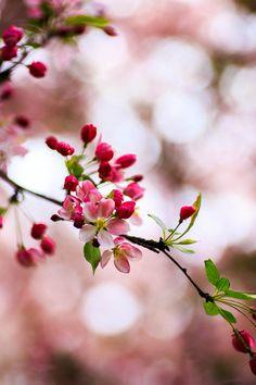 spring, flowers, blossom, nature