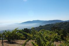 Ridge Vineyards' Monte Bello wine is grown on a special ridge high in the Santa Cruz Mountains, above Cupertino.