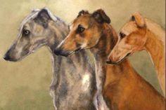 Sobers Greyhounds by Lucilla bollati