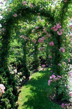 https://www.facebook.com/MormorsStuer  Gardening Tips & Lots Of Pictures also Lots of Good Fresh Garden Recipe www.gardentheeasyway.com