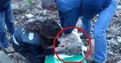 Sacaron una criatura casi muerta fuera del agua. La razón de sus heridas ME SORPRENDIÓ → http://www.viraldiario.com/rescate-lobo-herido/