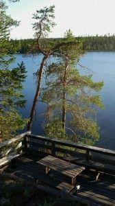 Nordic Adventures log cabin at Salla Civilization, Cabins, Hunting, Bird, Adventure, Plants, Birds, Adventure Movies, Plant