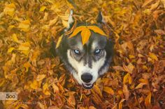 For the love of Fall by AmandaTromp #animals #pets #fadighanemmd