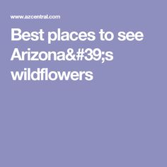 Best places to see Arizona's wildflowers