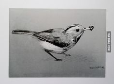 Recently fell in love and picked up a pencil for the first time in two years. (she likes birds)
