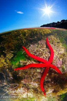 I Concurso Málaga Naturaleza Viva, mejor foto submarina.