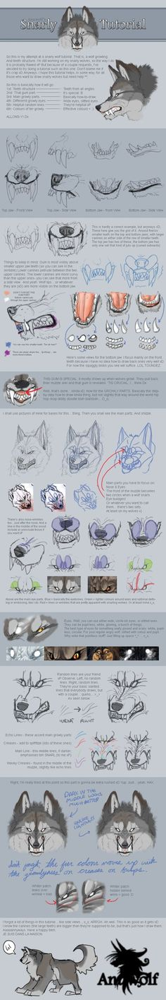 #anatomia rostro lobo | Snarly Tutorial by Anuwolf