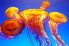 Underwater Ocean Photography | Topic: ~ Life Under The Sea - Beautiful Underwater Sea Creatures ...
