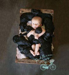 Egyszerre szült az anyuka és a család kutyája ❤ - Minden, ami kutya!