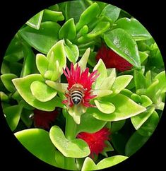 DUA HARMANI: tuvalet eğitimi Islam, Lotus, Lotus Flower, Lily