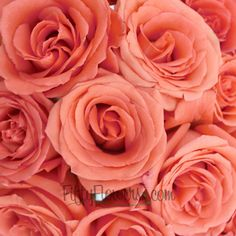 Movie Star Salmon Rose Buy Movie Star Salmon Roses at FiftyFlowers in packs of 25 to 200 stems! Movie Star is a fresh salmon orange rose featuring a beautiful full bloom. Its abundant petals are a unique color, often described as a deep coral-peach. Just like its namesake, this rose steals the spotlight in any wedding bouquet, table centerpiece or flower arrangement.