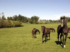 Study: Feed Young Horses According to Birth Date