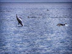 Kaikoura Dolphin Encounter New Zealand thesweetwanderlust.com