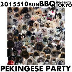 My works Pekingese portraits 愛犬ペキニーズと、 そのお友達の似顔絵・肖像画