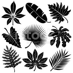 tropical leaves royalty-free stock vector art
