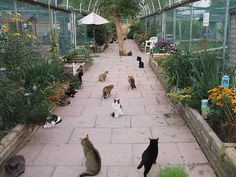 A cat shelter where I have unlimited space to take in and care for homeless, abandoned, or abused kitties ;_;