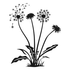 Dandelions Flower Spring Cuttable Design PNG DXF SVG & eps File for Silhouette Cameo and Cricut Dandelion Drawing, Dandelion Flower, Dandelion Pictures, Pine Tree Silhouette, Flower Silhouette, Stencils, Pop Art Wallpaper, Flower Sketches, Flower Svg