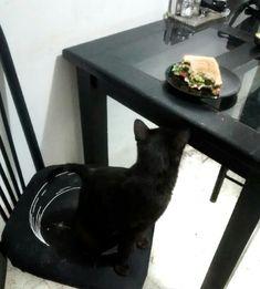 En la mira amigoos, mi mami acaba de dejar su sandwich solito♥... estoy tentado a darle una mordidita D: 😼 #ExpertoAnimal #MundoAnimal #ReinoAnimal #Animales #Naturaleza #Mascotas #AnimalesdeCompañía #AnimalesGraciosos #AnimalesTiernos