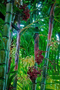 Hawaiian-Tropical Gardens