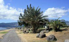 Une Lorraine à l'Île de la Réunion: LE PORT : Bord de mer et parc boisé…