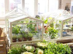 mini wooden greenhouse