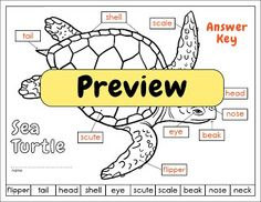 Labeling activities (blog post) for a sea turtle diagram, wooly mammoth, and an allosaurus #science #kids $