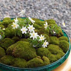 Moss decoration