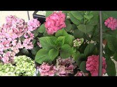 Olvídate de regar tus plantas - YouTube