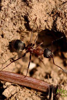Beautiful Die besten Hausmittel gegen Ameisen