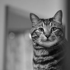 Model:Miracle #cat#cats#catofinstagram #catlovers#holidayphotography #instacat#instalike#likes#instagood #miraclecat#blackandwhite #bw#bnw#mono#monochrome #nikon#nikonphotography #猫#ねこ#愛猫 #photography#photo  #写真#写真好き  #写真好きな人と繋がりたい  #写真撮ってる人と繋がりたい  #ファインダー越しの私の世界  #一眼レフ#デジタル一眼レフ