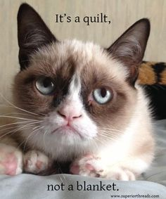 Get it right!: you tell them Grumpy Kitty!