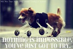 Ingenious Aid for a Challenged Dog- Nothing is Impossible
